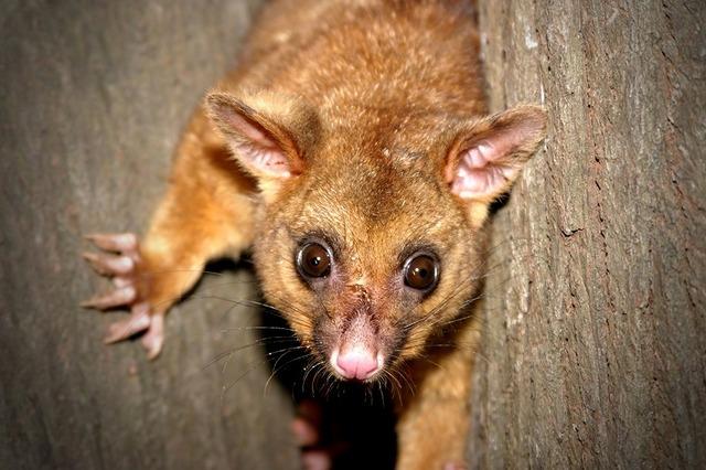 どきどき動物探検ツアー 野生の動物がたくさん見れるチャンス