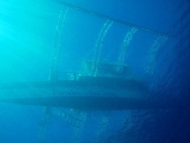 ボホールエリア(カビラオ)を潜る! セブ島発日帰りファンダイビング