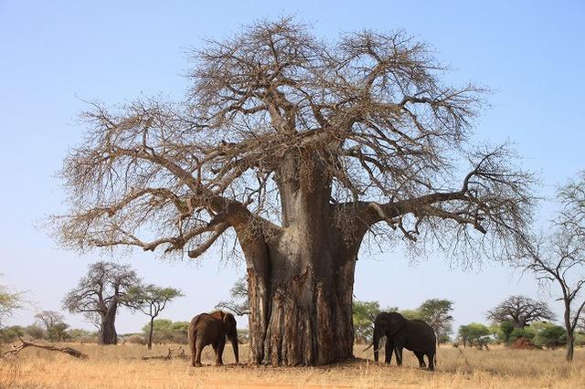 アフリカの大自然を訪れる タンザニア3泊4日の旅
