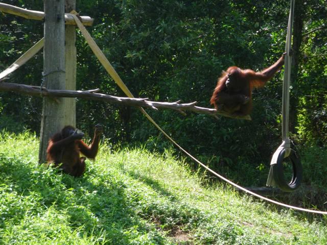 市内観光 + ロッカウィ動物園 (昼食付き)