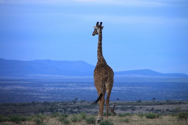 動物の楽園タンザニアプライベートサファリ6泊7日の旅-マニヤラ湖・セレンゲティ・ンゴロンゴロ・タランギーレ [アルーシャ発/ キリマンジャロ空港送迎可]