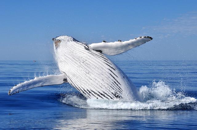 クジラウォッチングとワイナリー1日観光ツアー[7月~11月限定]