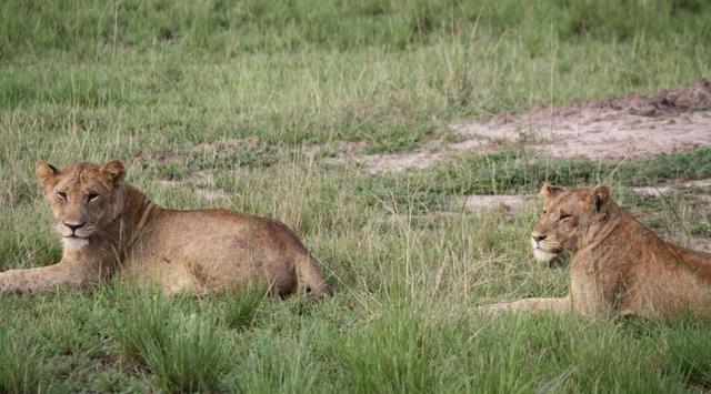 ルワンダ&ウガンダ5日間ジャングルサファリツアー