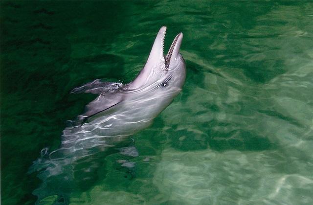 格安料金で参加できる!タンガルーマドルフィンクルーズ【ブリスベン発着/ランチバウチャー付/イルカの餌付け付または無し】