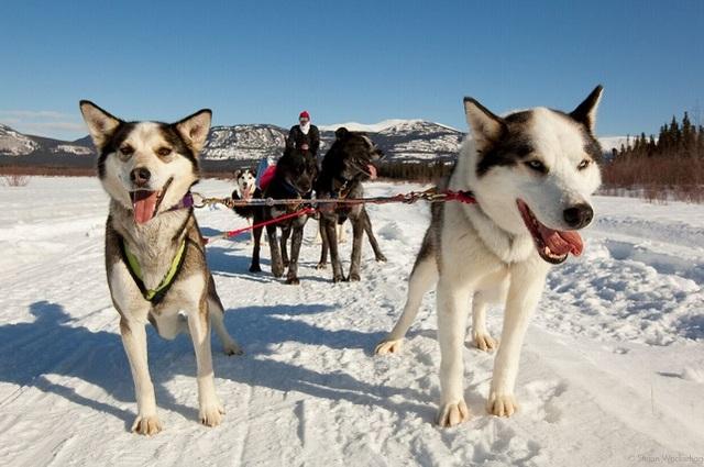 颯爽と走る!犬ぞり体験半日ツアー【午前または午後/温かい飲み物+スナック付/期間限定12月~3月】