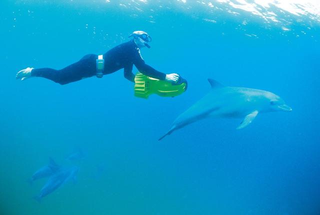 ドルフィン・スイム 野生のイルカと泳ごう!【期間限定9月~6月】