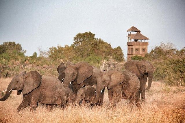ダルエスサラーム発着 動物たちがすぐそこに!動物保護区 サーダニ国立公園近くに泊まる2泊3日【ダルエスサラーム発着フライト / 宿泊 BABS' CAMP 2泊 / ゲームサファリ / 全食事付き】