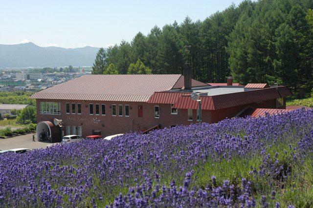 ラベンダーが咲くレンガ造りのワイナリー「ふらのワイン」見学!【北海道富良野市】