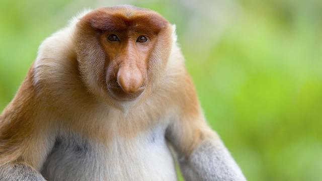 熱帯ジャングル天国!ボルネオ島サラワク州の自然国立公園【オンライン体験/Zoom利用 】